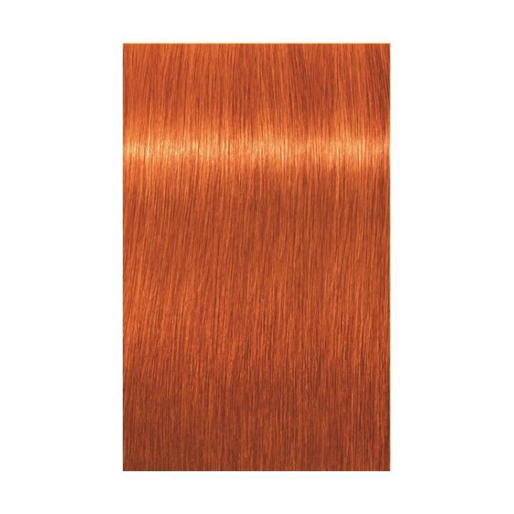 SCHWARZKOPF Igora Royal (8.77, Light Blonde Copper Extra)
