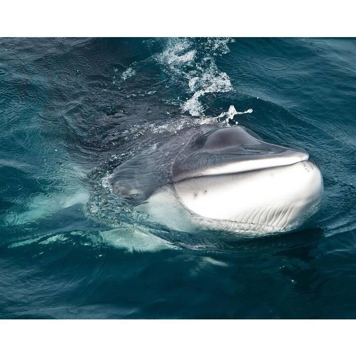 Whale Wars Staffel 6 (DE)