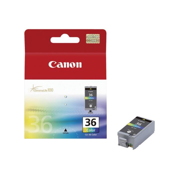CANONE CLI-36