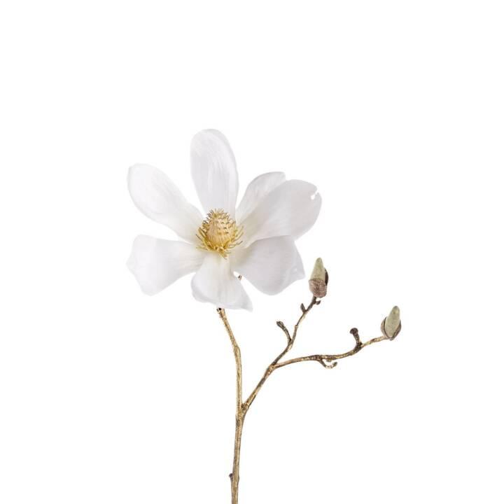 LEONARDO Kunstpflanze Magnolie (Gold, Weiss)