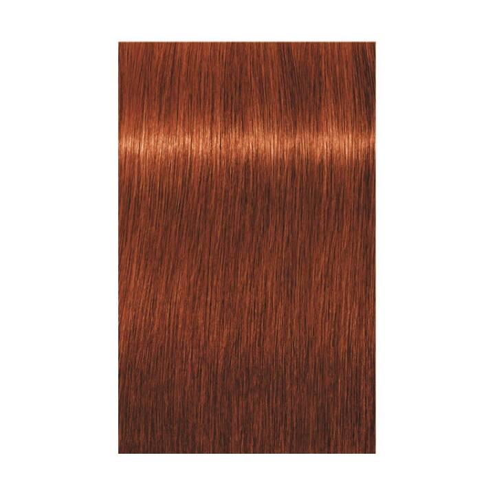 SCHWARZKOPF Igora Royal (6.77, Dark Blonde Copper Extra)
