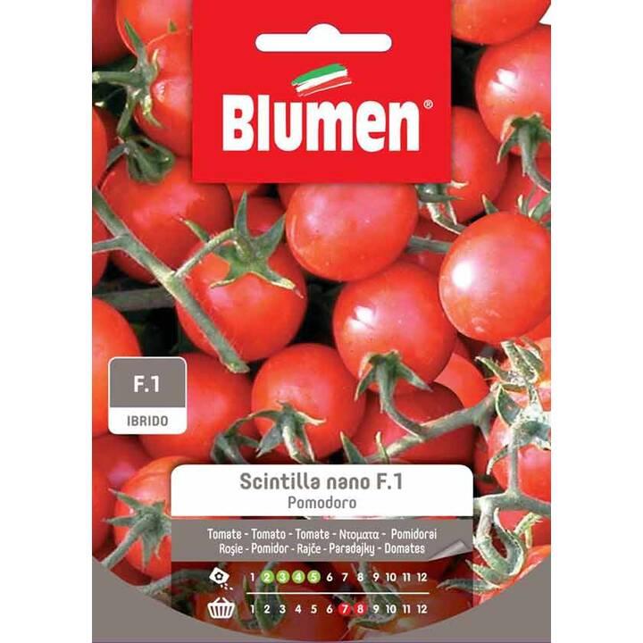 BLUMEN Tomate Sapore Italiano