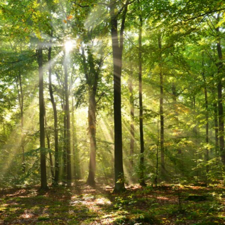 Wood Wide Web: the first virtual urban forest in Brussels