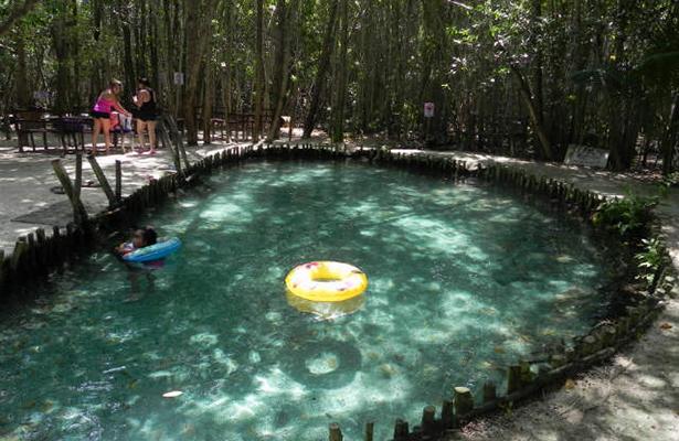 el corchito cenote helechos