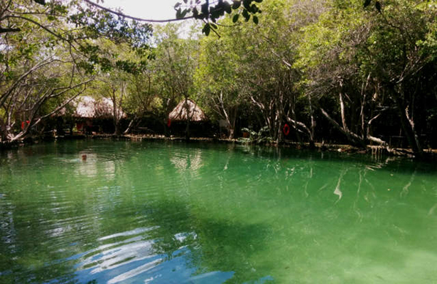 el corchito cenote pajaros