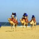 camellos_loscabos_01