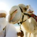 camellos_loscabos_04