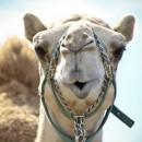 camellos_loscabos_06
