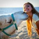 camellos_loscabos_ok
