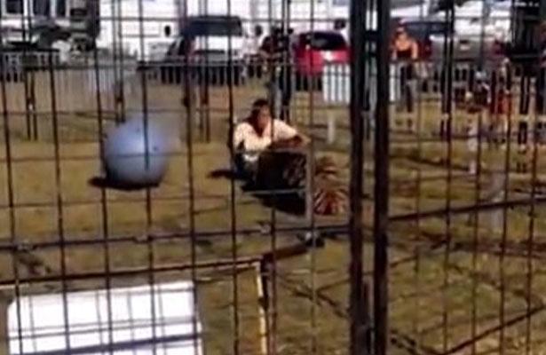 ¡Terrorífico! Entrenadora es atacada por un tigre en Florida