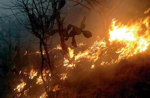 Más de 14 mil 600 hectáreas han sido consumidas por incendios
