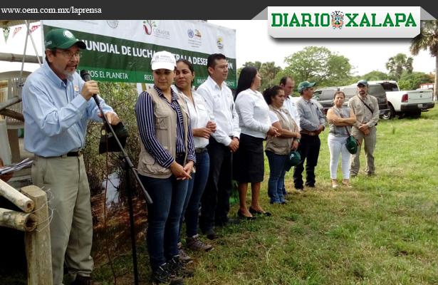 Quieren reforestar más de mil hectáreas de mangle en el norte de Veracruz