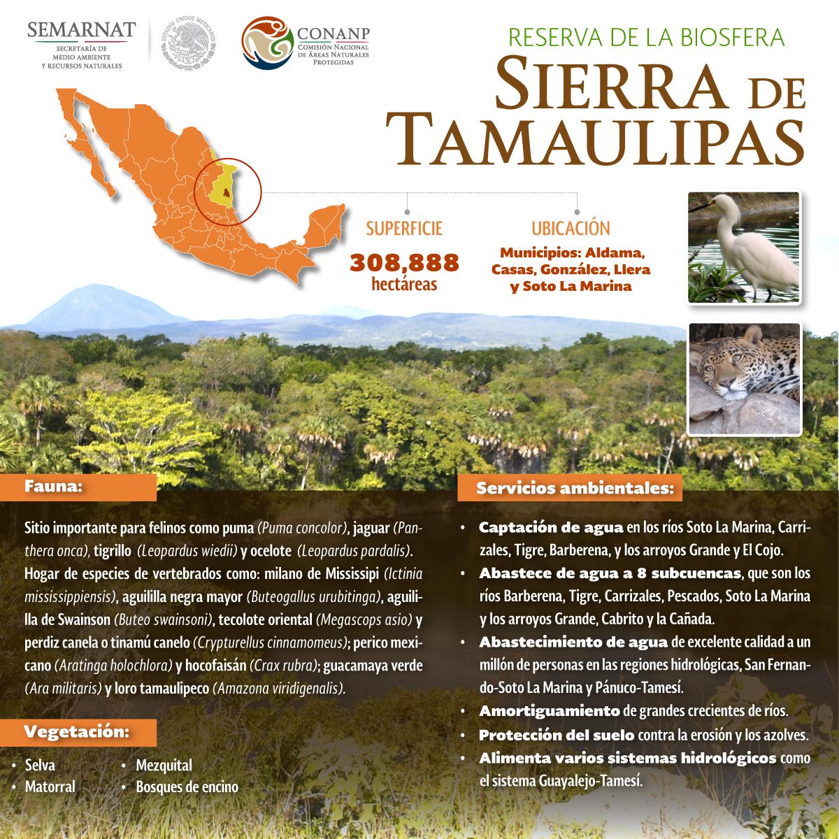 INFOGRAFIA-SIERRA-TAMAULIPAS