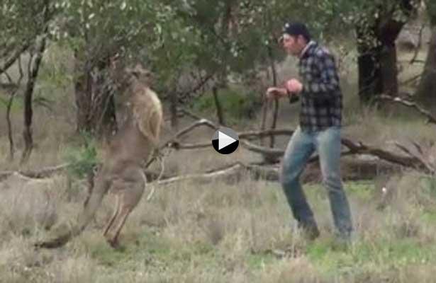 Brutal puñetazo le da a un canguro para defender a su perro