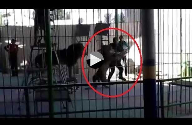 León mata a su domador en un circo de Egipto