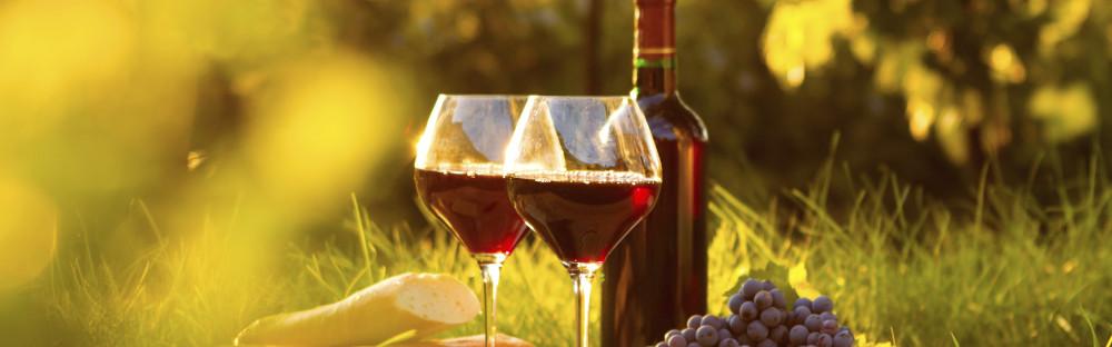 Las 14 mejores rutas del vino de España