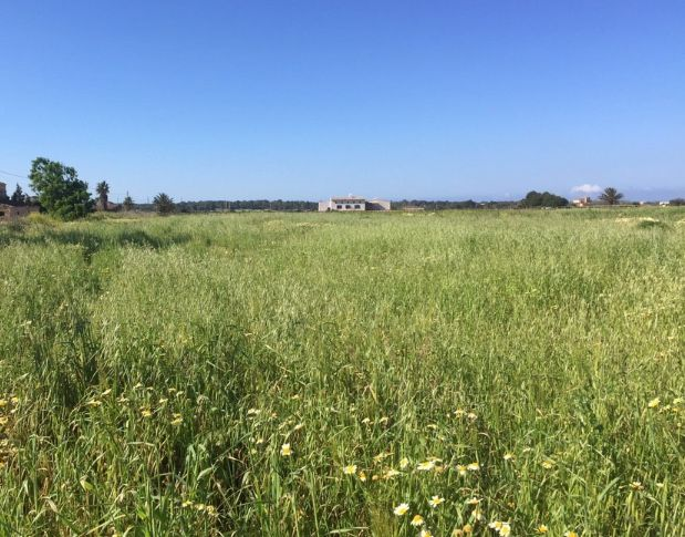 Countryside property in Campos, Costa / Coast / Küste / Kust, for sale