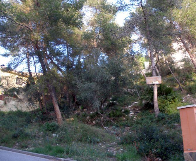 Solar Urbano en Olivella, Can Suria, venta