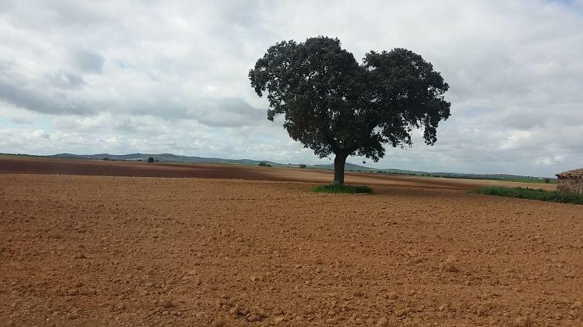 Terreno agricoli in Azuaga, vendita