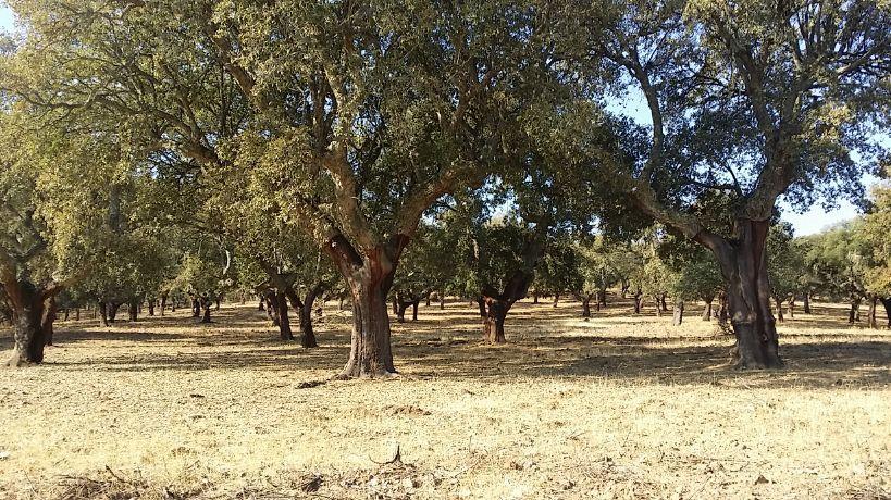 Terreno rústico em Cáceres, venda