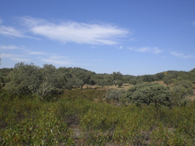 Countryside property in Villanueva de Córdoba, Valle de los Pedroches, for sale