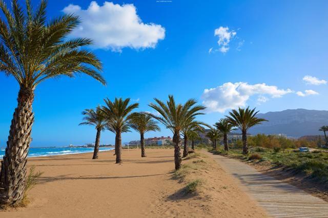 palmiers sur la plage de denia
