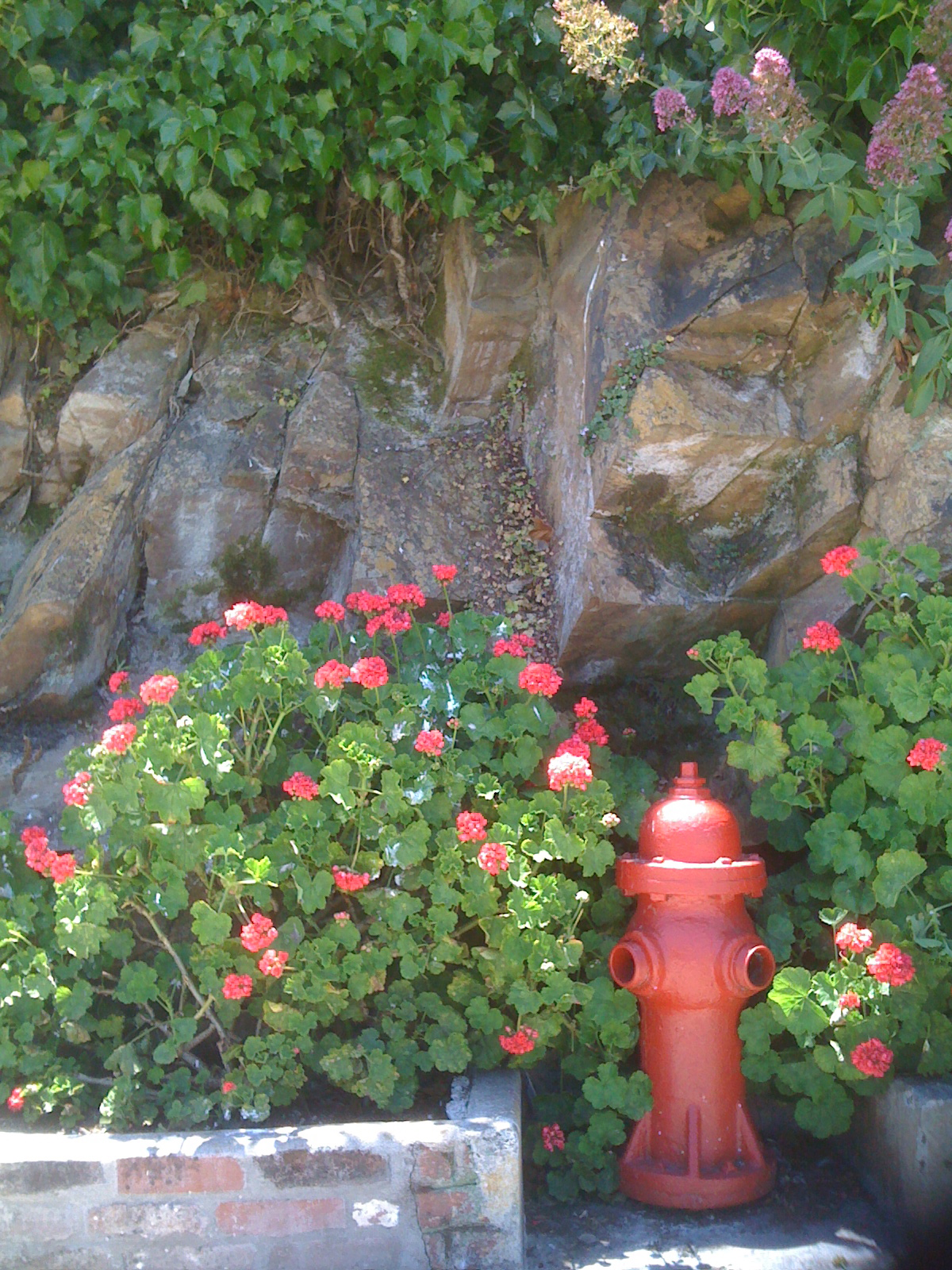 Hydrant with flowers