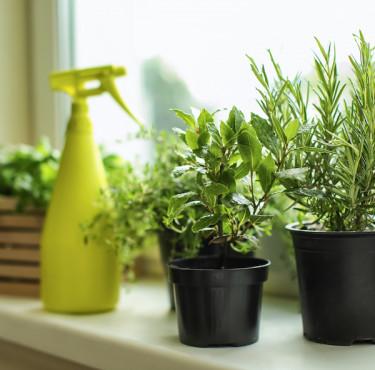 Les brumisateurs pour plantes les plus décoBrumisateur de plante
