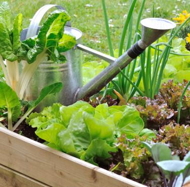 Les essentiels pour commencer un jardin potagerjardin potager