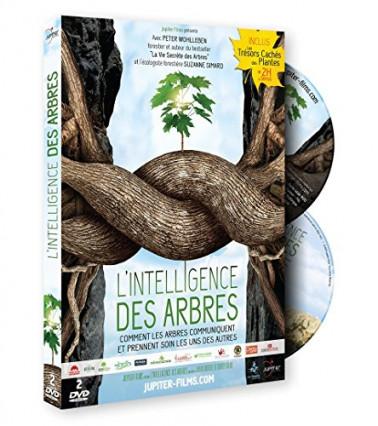 L'intelligence des arbres, comment les arbres communiquent et prennent soin les uns des autres