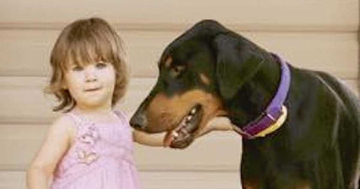 Bringing A Rescue Dog In House With A Toddler