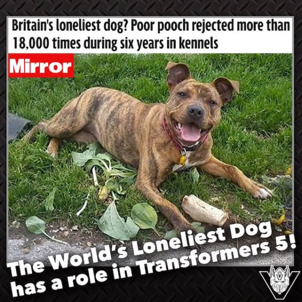 Transformers Dog 2 600x600 - Shelter Dog Who Was Rejected 18,000 Times Gets Hollywood Movie Role And A Forever Home