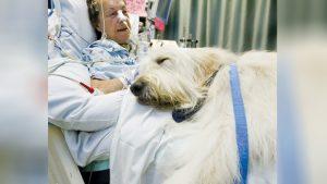 pet-visit-to-hospital