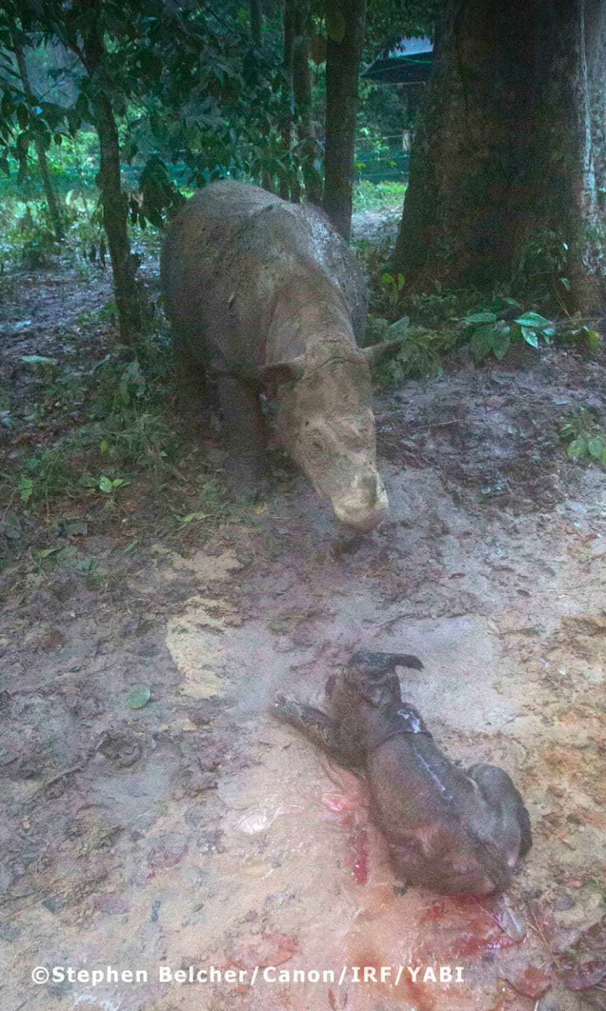 rhino2 1 - Baby Rhinos Break Unbelievable Record