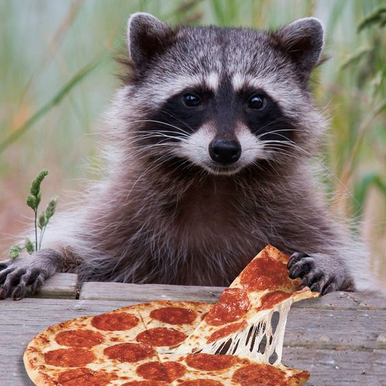 16565bd4e0e2e71639600bee7b3a0026 - Qui est le voleur de pizza ?