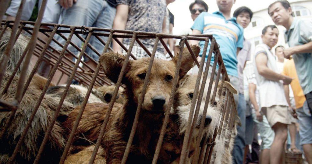 ad 201878807 1024x538 - Chine: Le festival de la barbarie continue de massacrer des chiens et des chats