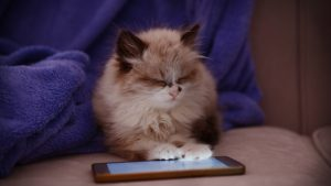 Cute little kitten with mobile phone lying on sofa at home