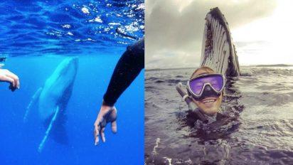 humpback-whale-photo
