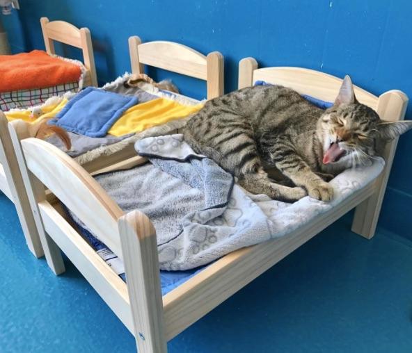 1 45 - Vidéo: Ikea donne ses lits de poupée à des chats abandonnés