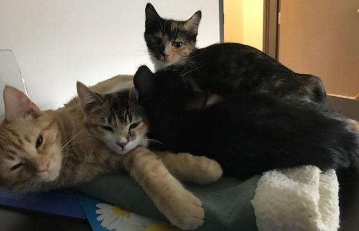 3 12 - 【話題】手術を受ける動物の横で支える猫の看護師!