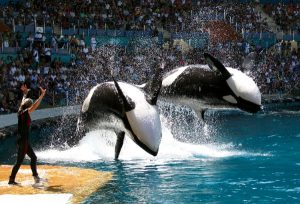 marineland 300x204 - Top 5 des choses que l'on fait qui sont de la maltraitance animale
