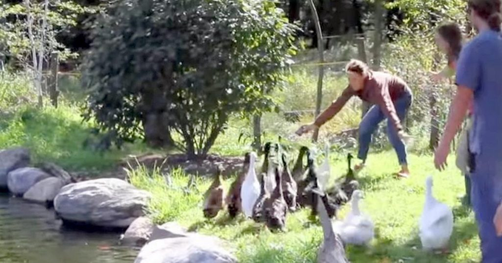 ngaiwsu 1024x536 - Ces canards découvrent l'eau pour la première fois de leur vie