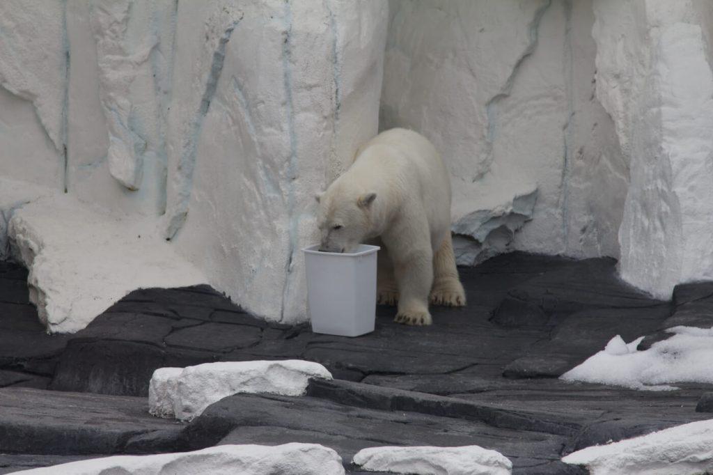 s2 1024x682 - Une ours polaire vient de mourir de chagrin dans un zoo de SeaWorld