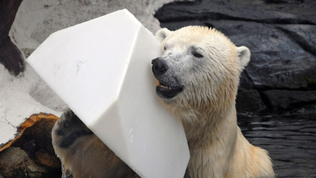 s3 - Une ours polaire vient de mourir de chagrin dans un zoo de SeaWorld