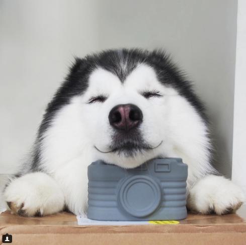 3 - 【癒し】表情豊かなハスキー犬'マル'の写真集!