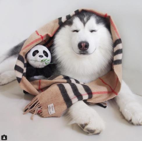 5 - 【癒し】表情豊かなハスキー犬'マル'の写真集!
