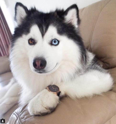 7 - 【癒し】表情豊かなハスキー犬'マル'の写真集!