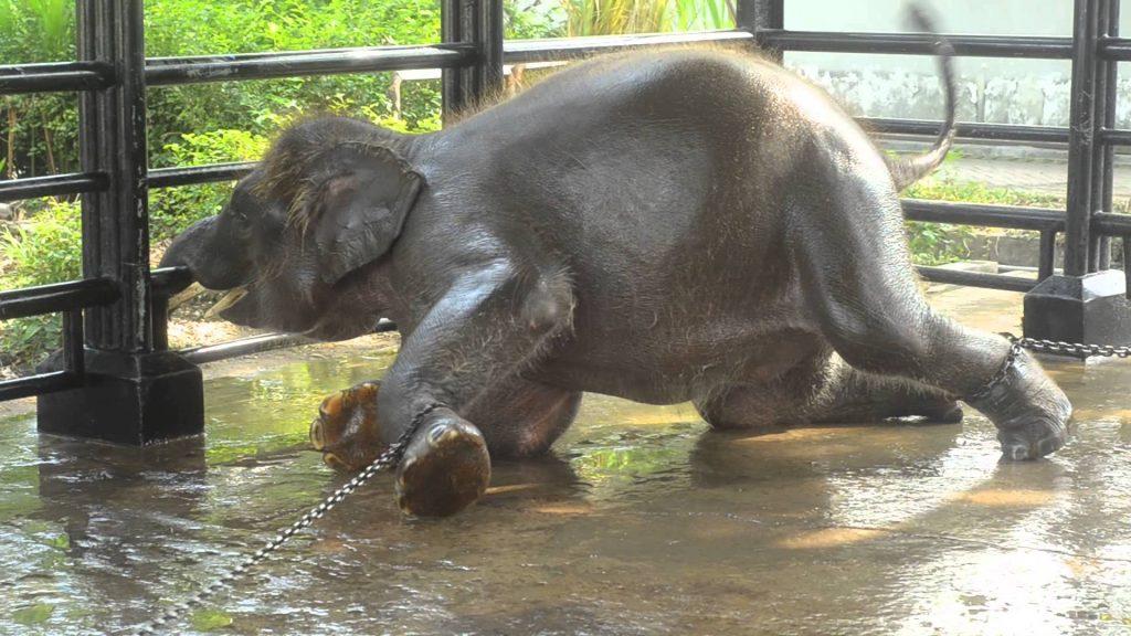 """elephant 1024x576 - Honte : le """"zoo de l'horreur"""" laisse mourir ses animaux"""