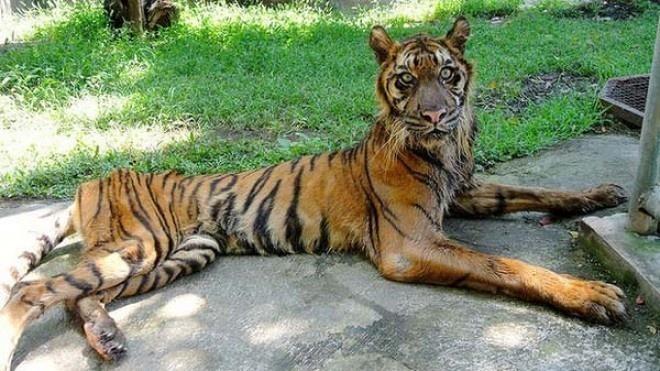 """lifebuzz 791364e721d2d59aee38aacd5b3ddef8 limit 2000 - Honte : le """"zoo de l'horreur"""" laisse mourir ses animaux"""