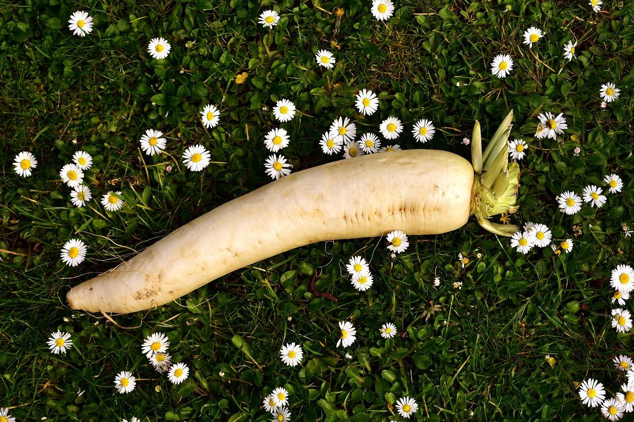 radish 2290615 1280 - 女がオナニーによく使う野菜ランキングTOP6